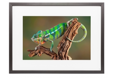 Memento - M25A023 - Digital Photo Frames