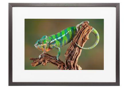 Memento - M25A023 - Digital Photo Frames
