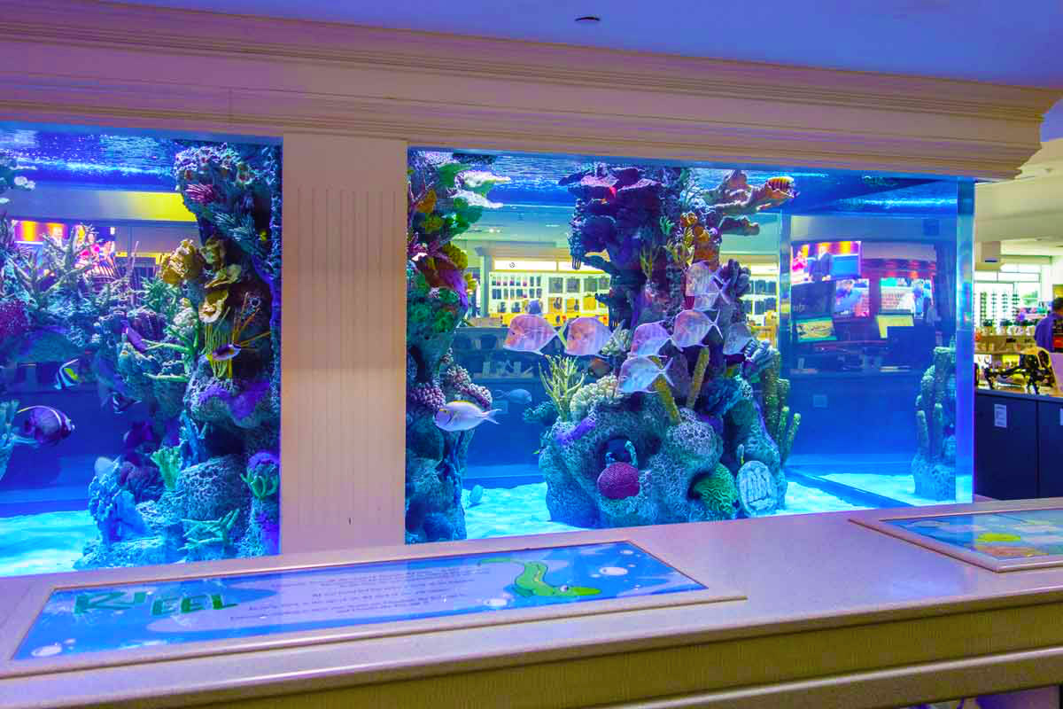 Abt store attractions gallery for Fish aquarium store