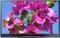 "Samsung 64"" Black Plasma 1080p 3D HDTV"